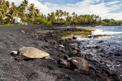 Пунальюу Бич (Гавайи)