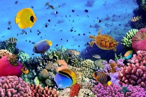 Аквариум Красного моря