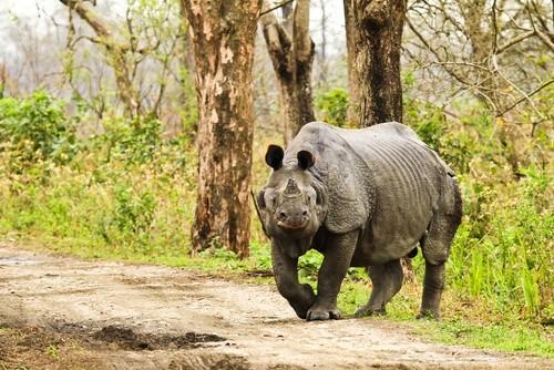 Национальный парк Казиранга, Индия