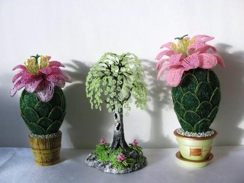 внешняя прелесть кактуса с цветком