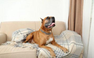 6 способов избавиться от запаха животных в квартире
