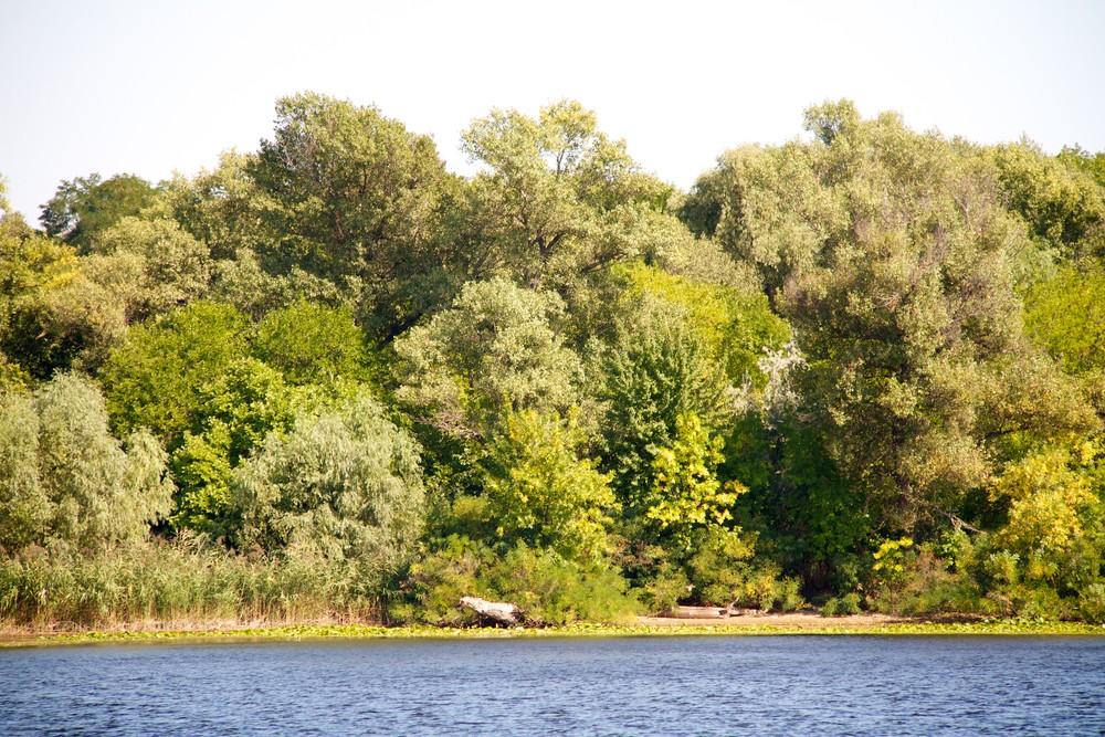 Черный лес, Кировоградская область