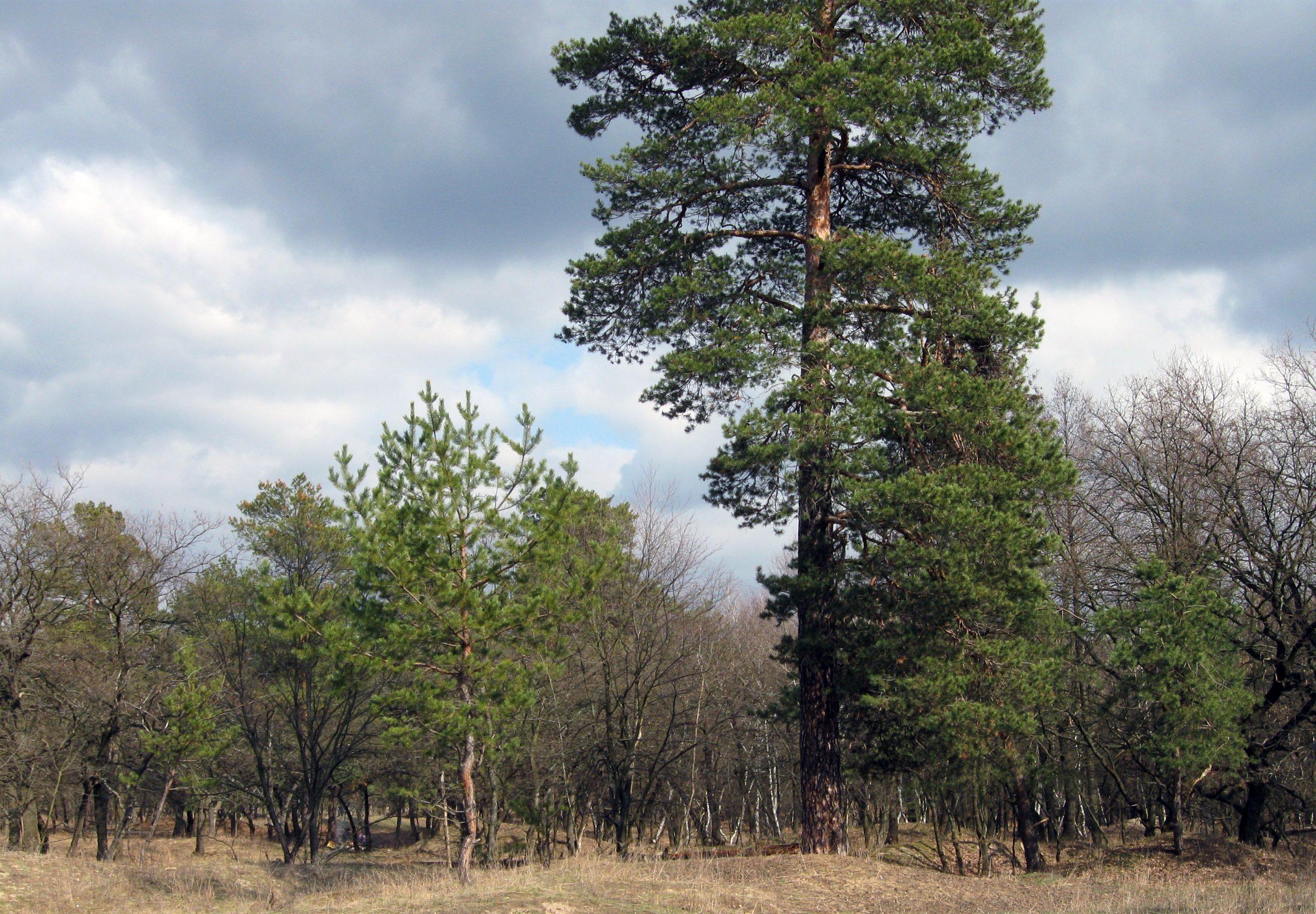 Самарский лес, Днепропетровская область