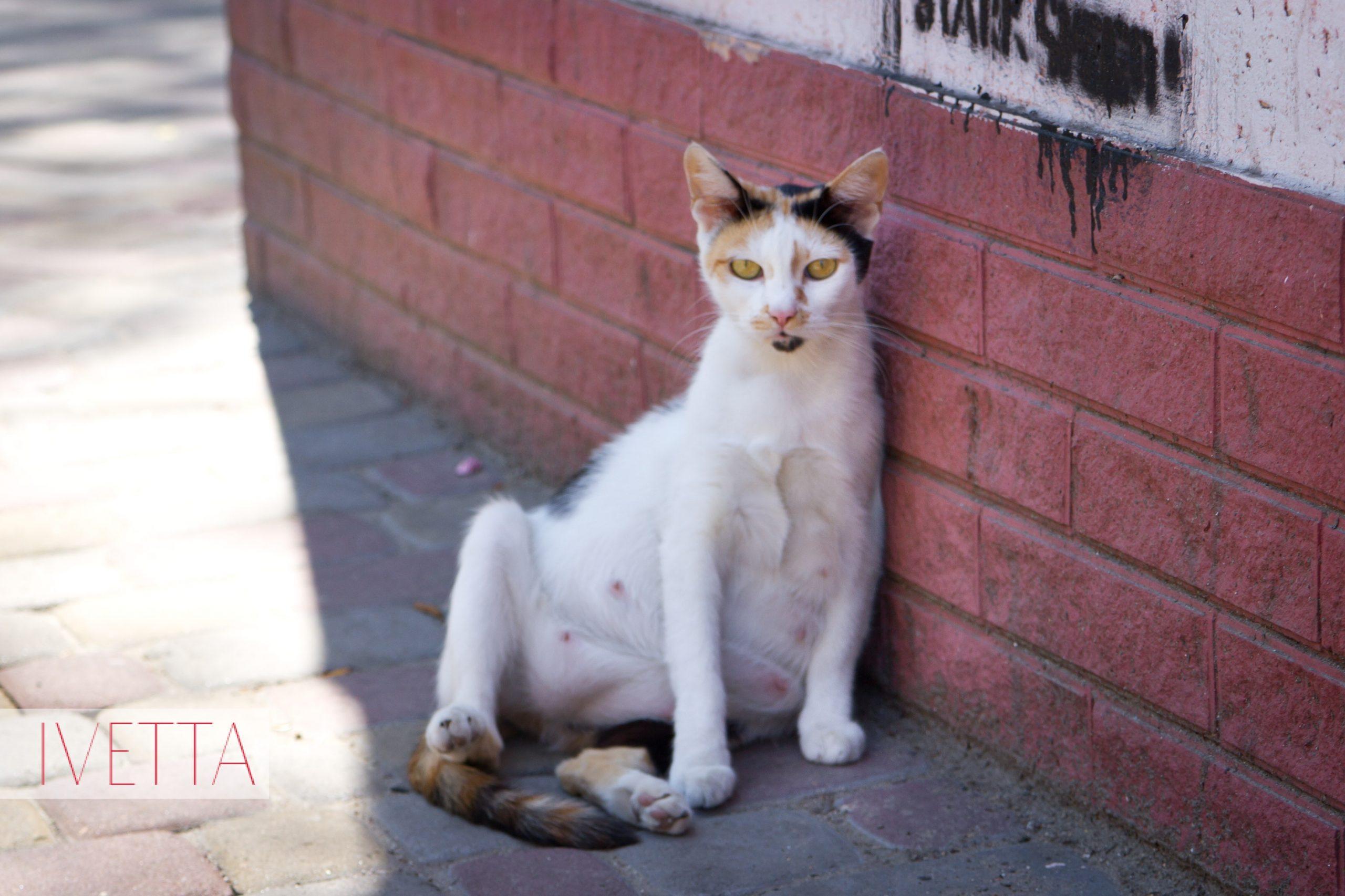 Кот сидит в Одессе