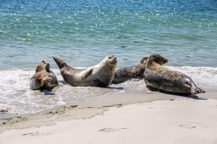 Прибежище тюленей