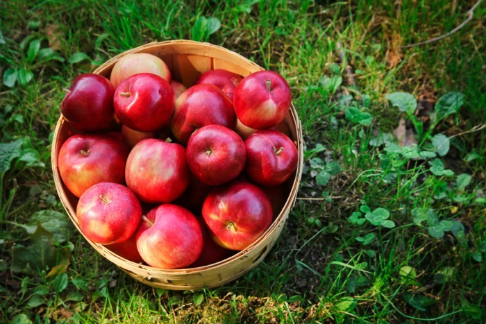 Яблоки - самые пестицидосодержащие фрукты