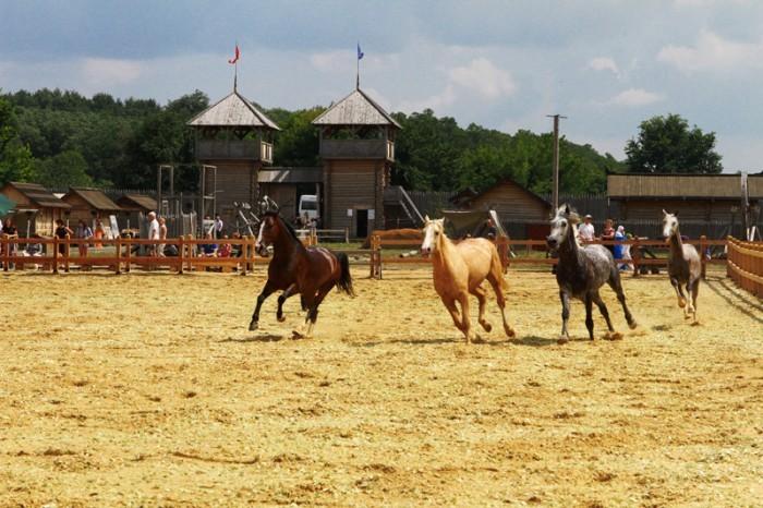 Музей живых лошадей