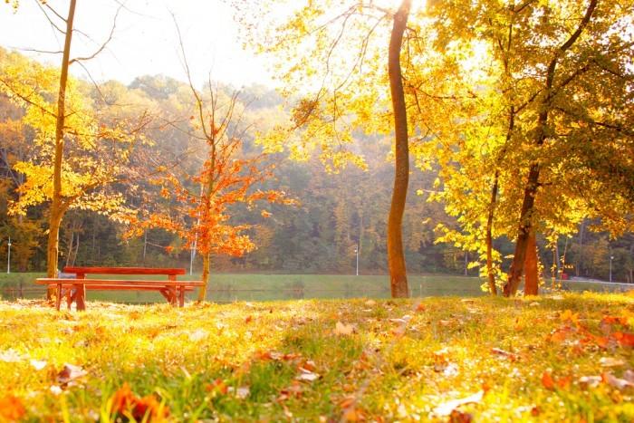 Куда пойти на свидание в Киеве в ноябре: топ-5 городских и пригородных парков