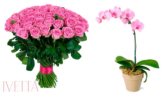 Цветы в горшке или в букете