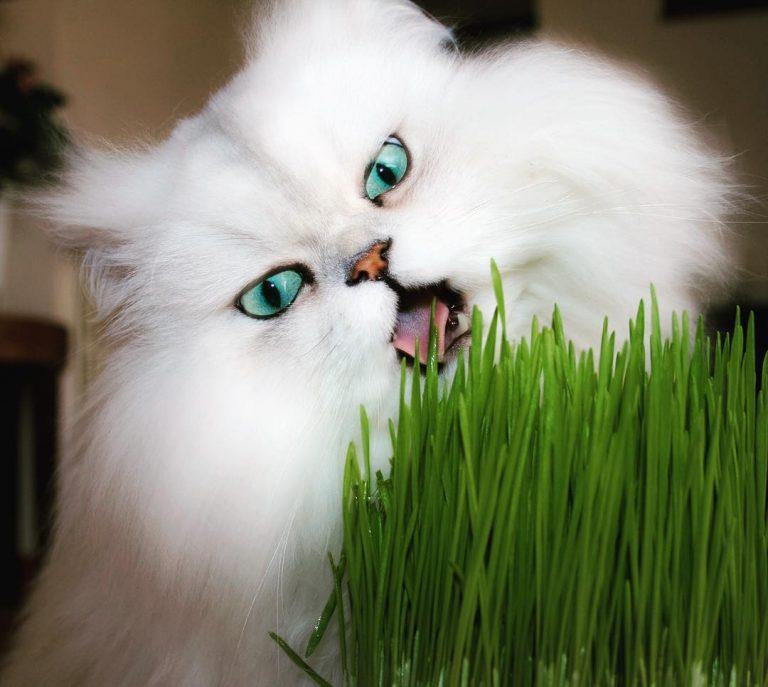 Всемирный день кошек: 7 самых популярных кошачьих профилей в Instagram