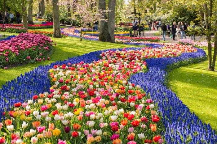 Парк с тюльпанами в Амстердаме