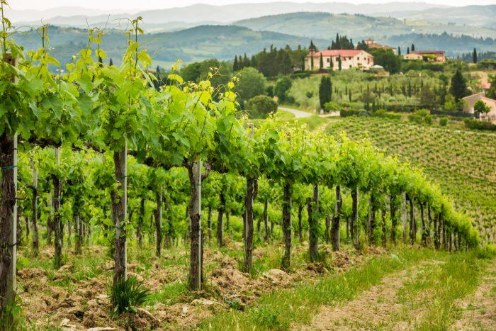 Винодельня в Тоскане
