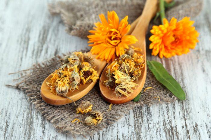 Свежие и высушенные цветки календулы на деревянных ложках