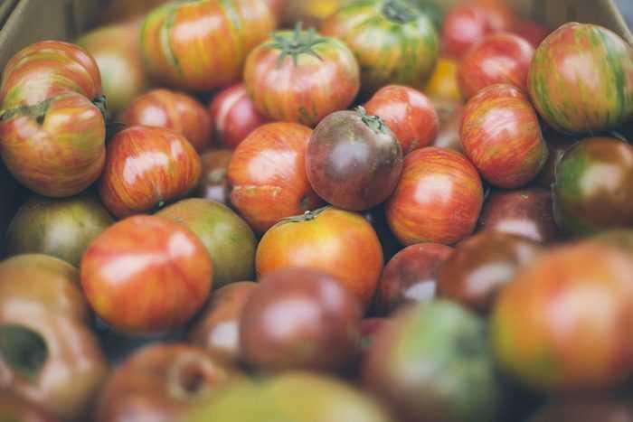 разноцветные помиоры