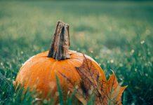 тыква и лист на траве