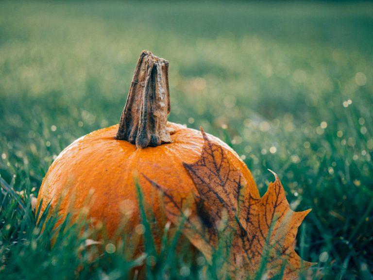 Осенний рацион  для здорового питания 🍁: 9 лучших продуктов