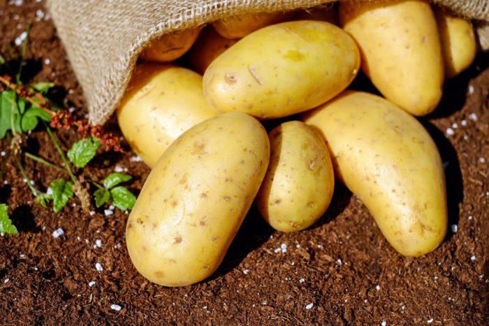 картошка на земле в мешке