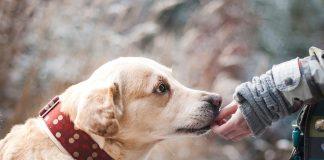 8 причин почему собаки лучше кошек
