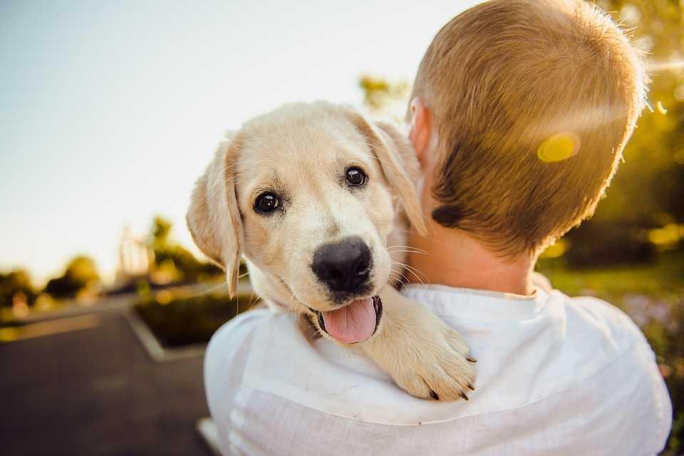 Собаки положительно влияют на Ваше здоровье