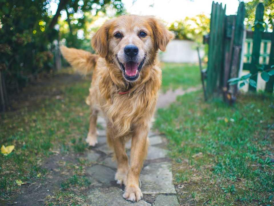 Собаки счастливые