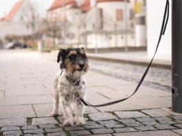 За безопасностью животных в Киеве будет следить зоополиция