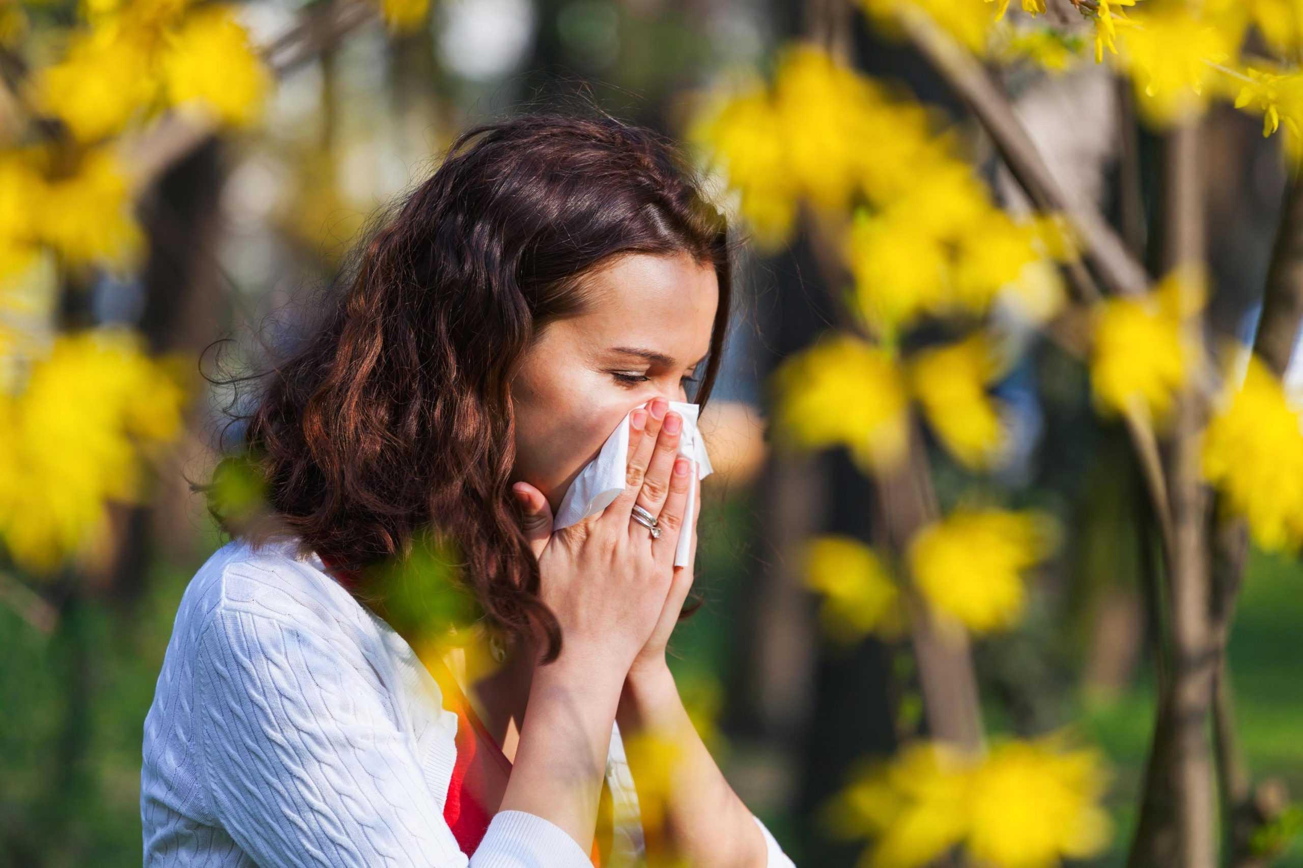 Симптоми алергії на амброзію